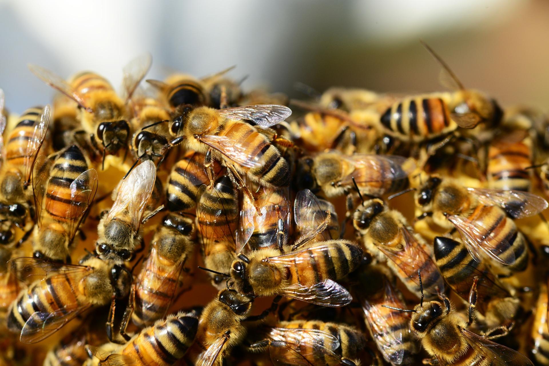 Poczet Piwnych Blogerów: Pszczółki